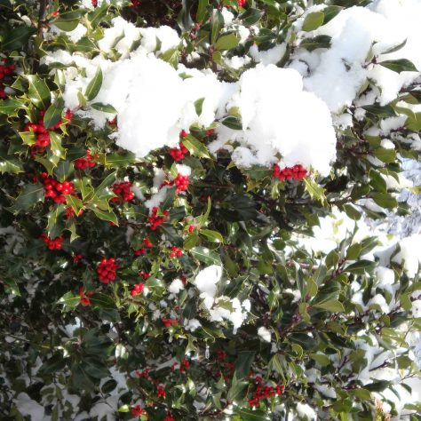 'The Holly Bears a Berry' | P Marples