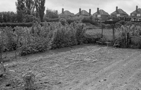 Marriott Avenue Allotments