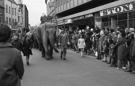 Elephants in Mansfield