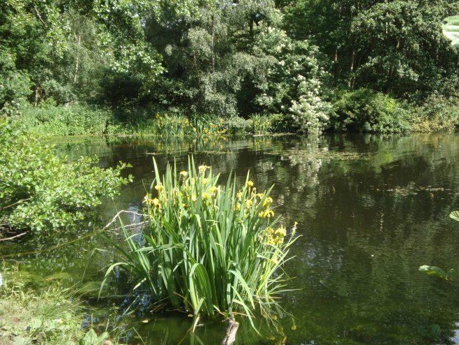 Spa Ponds Walk