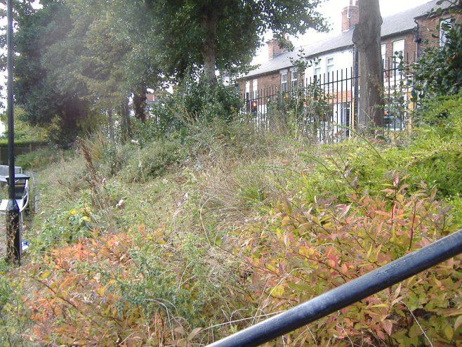 Forest Town Community Garden