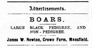 Newspaper advert (undated) showing some of James Newton's stock | Private collection