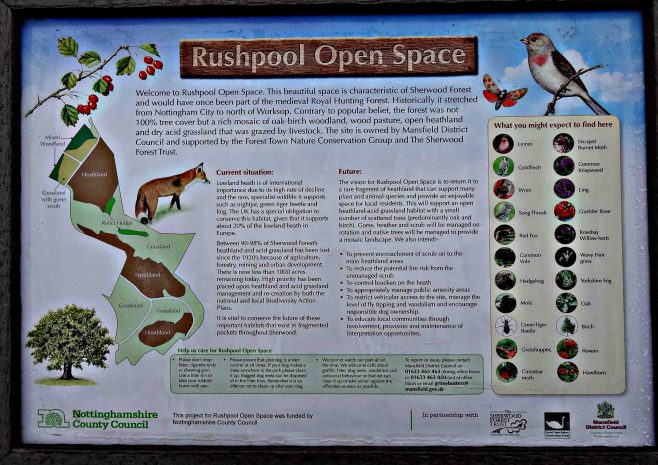 Rushpool Open Space, Forest Town