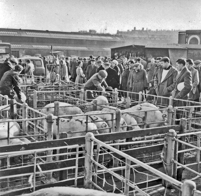 Pig pens | CHAD 197 (1961)