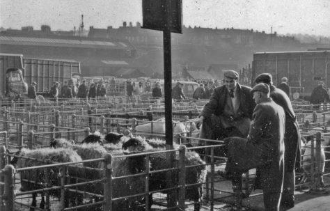 Mansfield's Cattle Market