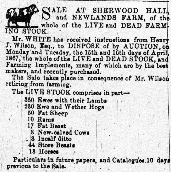 Cattle Sale at Sherwood Hall