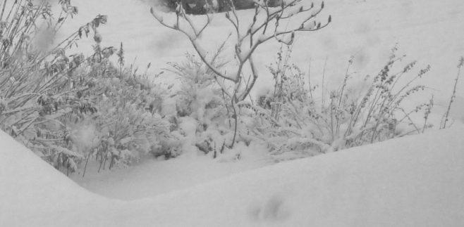 A snow scene for illustration, not taken in 1946