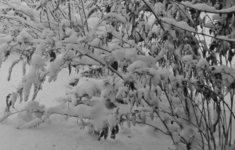 Bygone Winter