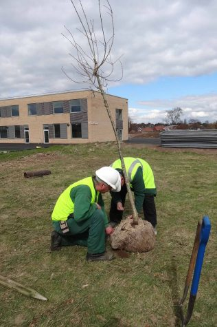 Planting an English Oak tree - 30 March 2016 | P Marples