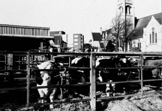 Cattle Market December 1988 | Mansfield Museum
