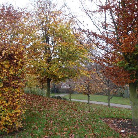 Shades of autumn | M & P Marples - taken 14 November 2011