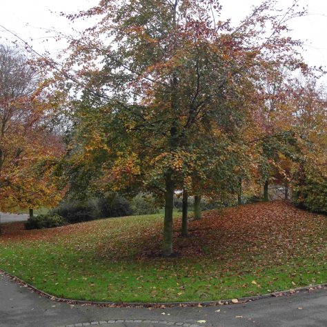 Autumn leaves | M & P Marples - taken 14 November 2011